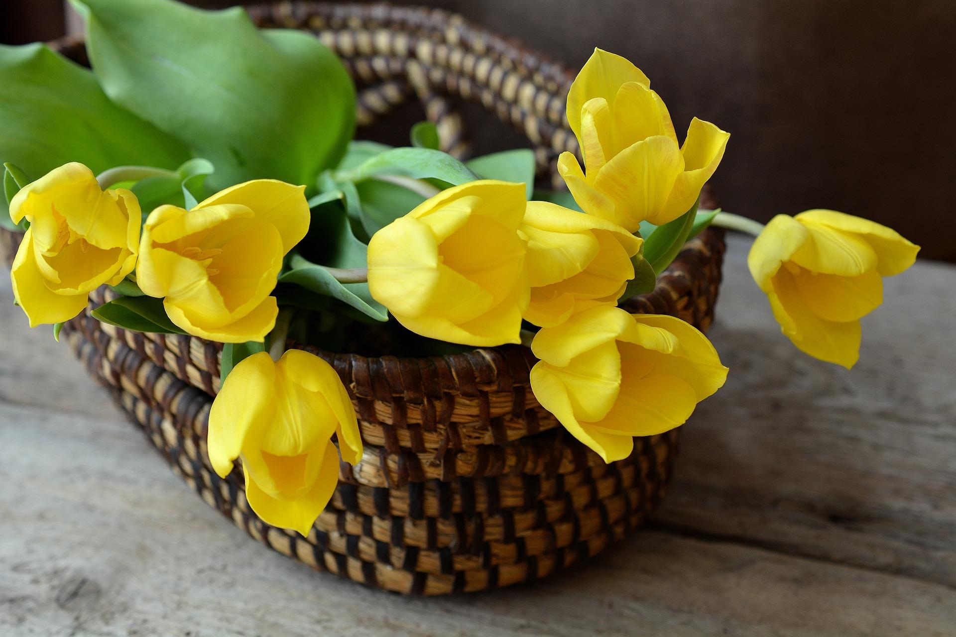 Blog - 10 tipov ako oživiť byt po zime - kvety